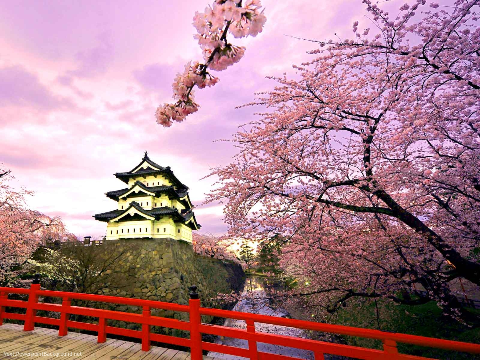 Japanese House And Sakura Background Powerpoint